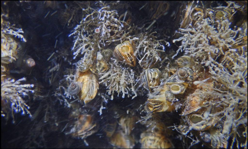 Build Up Of Carpet Bacteria