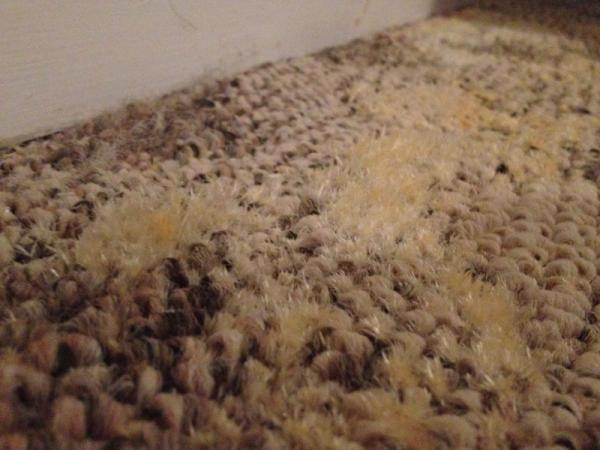 Mold Begins To Accumulate On Carpet